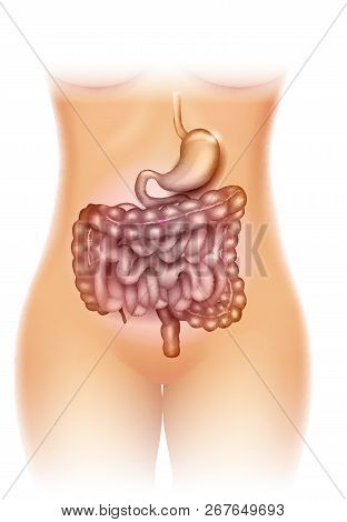 Stomach And Colon Illustration, Beautiful Woman Silhouette