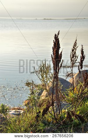 Seascape With Coastal Vegetation By Calm Water