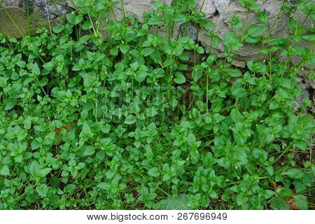 Green Small Vegetation Of Grass And Leaves On A Concrete Wall