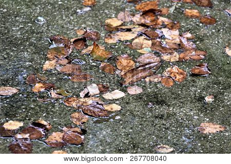 Leaves Gather On The Wet, Mossy Concrete After A Rain On An Autumn Afternoon.