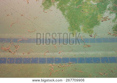 Pool Steps In Dirty Pool