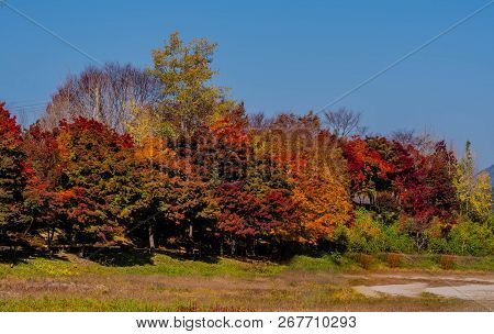 Trees In Beautiful Fall Colors Of Red, Yellow And Orange Next To Clearing At Countryside Park Under