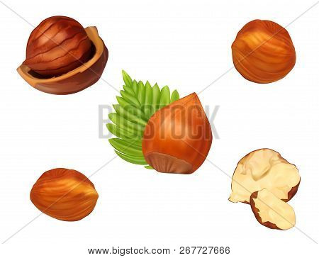 Hazelnut Set With Leaves.realistic Vector Illustration. Fresh Organic Filbert Isolated On White Back