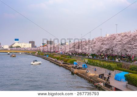Asakusa Sumida Park Cherry Blossom Festival. In Springtime, Sumida River Is Surrounded By Cherry Blo
