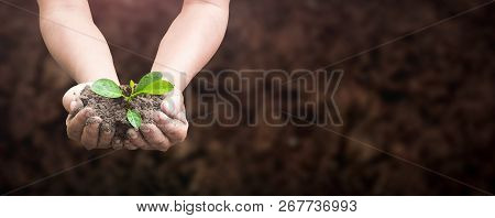 World Environment Day Concept: Human Hands Holding Seed Tree With Soil On Blurred Agriculture Field