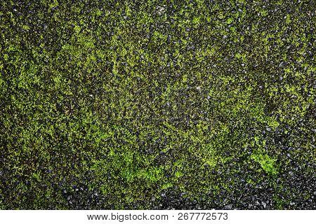Black Asphalt Surface With Green Moss. Dark Background