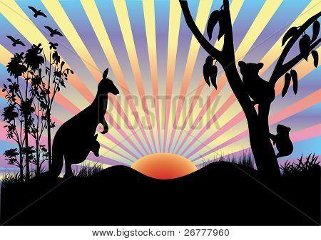 Koala And Kangaroo In Sunset