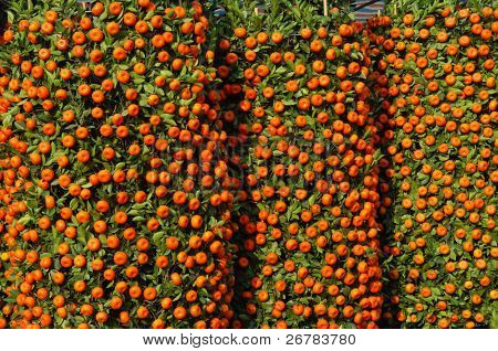 Tangerines, a symbol of good luck at Chinese New Year. poster