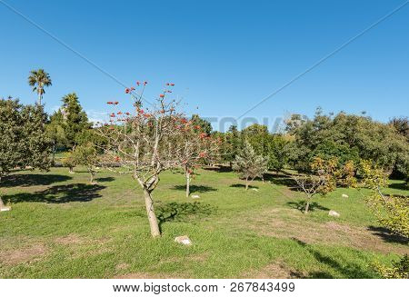 The Arboretum At Majik Forest, A Public Park In Durbanville, In The Western Cape Province. Each Tree