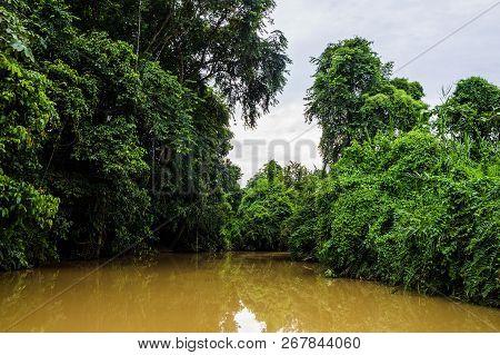 Lush Rainforest Along Yellow Water Sabah, Borneo. Malaysia.