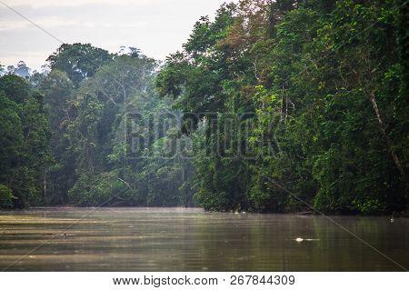 Rainforest Along The Kinabatangan River, Sabah, Borneo. Malaysia.