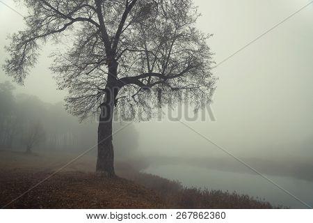 Autumn Forest Mist Trees Silhouette Landscape. Mysterious Forest Mist Trees In Autumn Fog. Halloween