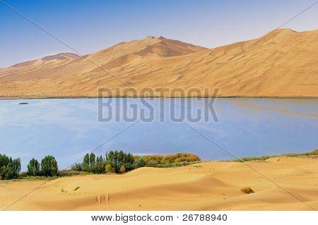 Dry plant in desert lake