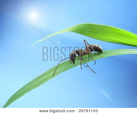 ant on a green grass  on sunset