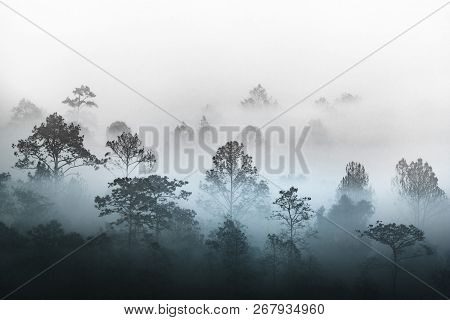 Silhouette Of Tropical Forest Covered In Morning Fog. Misty Jungles On Thai Mountain. White Water Va