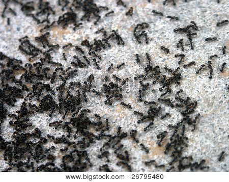 close up shot of a lot of ants