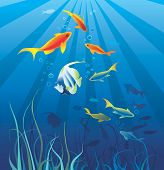 Marine life sea. Fish seaweeds bubbles. Illustration poster