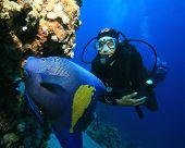 Arabian Angelfish (Pomacanthus maculosus) and Scuba Diver poster