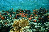 Pristine beautiful coral reef poster