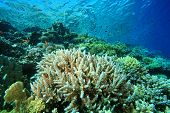 Beautiful Coral Reef - at risk due to global warming poster