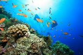Scuba Divers and Coral Reef poster