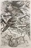 Tawny-shouldered Podargus old illustration (Podargus humeralis). Created by Kretschmer and Illner, published on Merveilles de la Nature, Bailliere et fils, Paris, 1878 poster