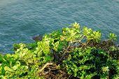 Grass at sea shore poster