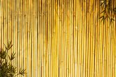 Light Golden bamboo Background great for any project. frame of bamboo-leaves background. Please take a look at my similar bamboo-images poster