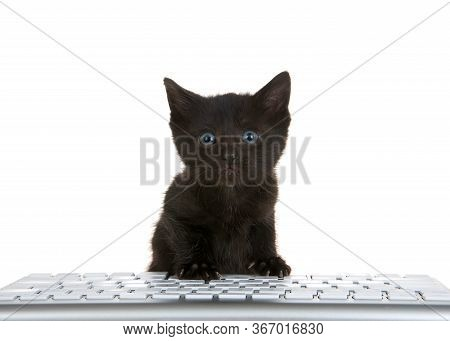 Adorable Tiny Black Kitten With Blue Eyes Peaking Over A Computer Keyboard Isolated On White Backgro