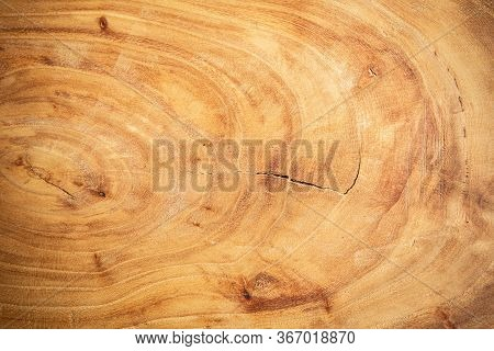 Wooden Round Cut From Oak, Cutting Board, Cross-section Of A Cut Wooden Piece Of Wood With Cracks An