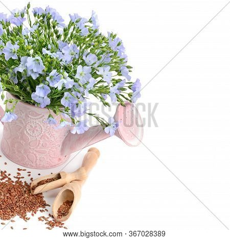 Flax Seeds And A Bouquet Of Flax Flowers In A Decorative Watering Can Isolated On A White Background