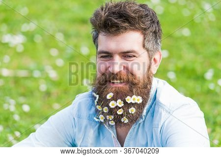 Hipster On Smiling Face Sits On Grass. Guy Looks Nicely With Daisy Or Chamomile Flowers In Beard. Ma
