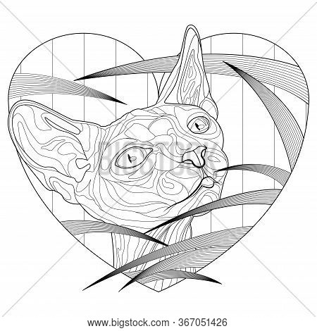 Cat Sphynx Coloring Pages For Adults, Pets Decorative Line Art Vector Illustration Design. Home Nima
