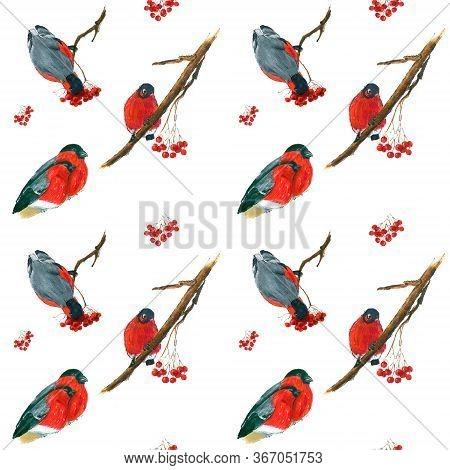 Seamless Hand Drawn Background With Bullfinch Birds.