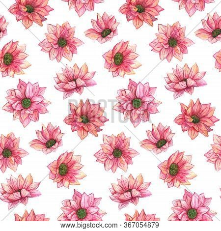 Watercolor Pink Chrysanthemum Flowers Leaves Seamless Pattern Texture Background