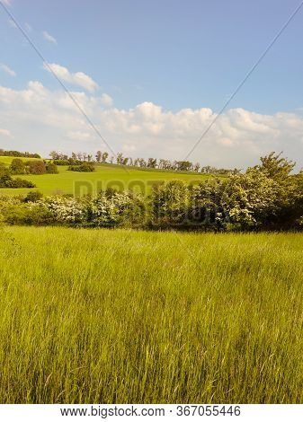 Summer Rural Nature Field Landscape. Summer Meadow Field Panorama