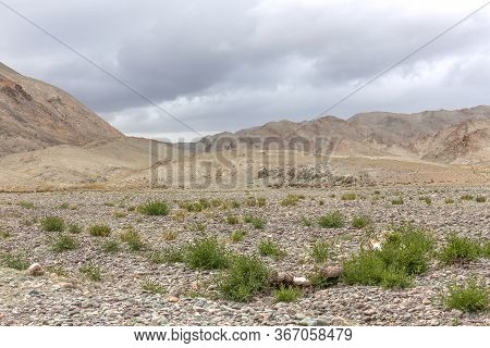 Dry Mongolian Landscapes In The Altai Mountains, Wide Landscape.