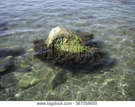 A Seaweed-covered Rock On The Seashore. Through The Clear Water, You Can See The Bottom And Seaweed.