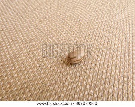 A Grain Of Carioca Beans Isolated On Light Colored Raw Fabric.
