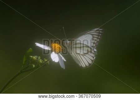 White butterfly and yellow flower on green background