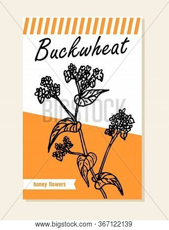 Buckwheat Label, Sticker And Card For Wildflower Honey Products. Banners For Beekeeping And Apicultu