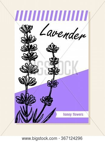 Lavender Label, Sticker And Card For Wildflower Honey Products.t. Black Line Lavender. Vector Hand D