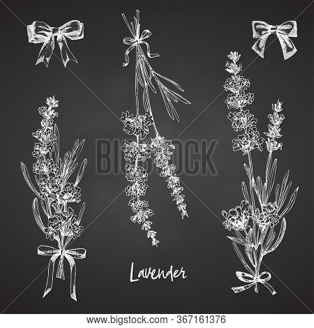 Set Of Hand Drawn Sketch Of Lavender Flower And Cute Bows Isolated On Chalkboard Background. Vintage
