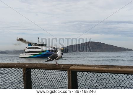 San Francisco, Usa - October 1, 2015: Gull And San Francisco Bay Ferry On The Pier 39  In San Franci