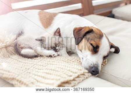 Dog and cat sleeping together. Dog and kitten friends