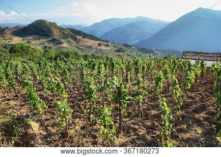 hill vineyard in Sicily countryside landscape
