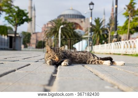 Istanbul, Turkey - May 13, 2020: A Cat Lies In Empty Sultanahmet Square During Coronavirus Pandemic