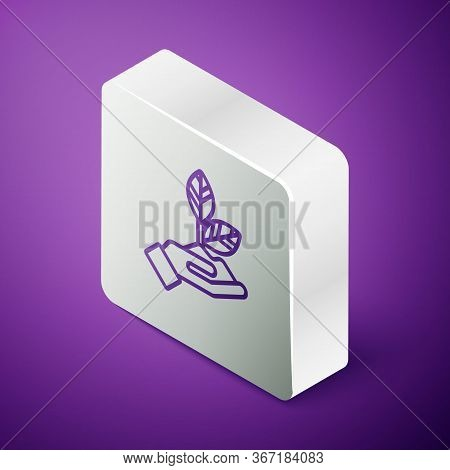 Isometric Line Plant In Hand Of Environmental Protection Icon Isolated On Purple Background. Seed An