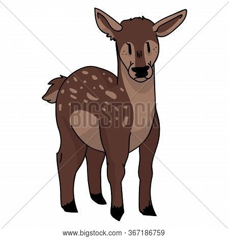 Cute Woodland Doe Vector Illustration. Buck Deer With Antlers. Childlish Hand Drawn Doodle Style. Fo