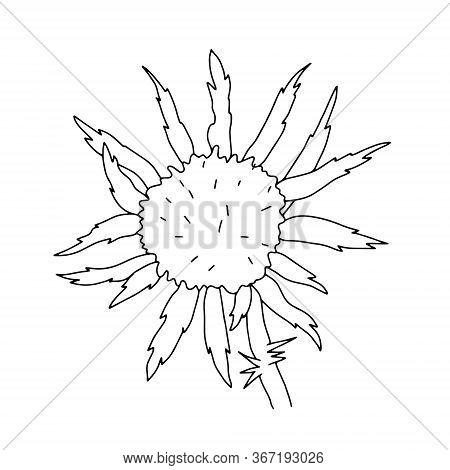Milk Thistle Wild Flower Vector Outline Illustration, Simple Botanical Image In Hand Drawn Style, Sy